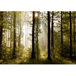 Fotomural Morning Forest